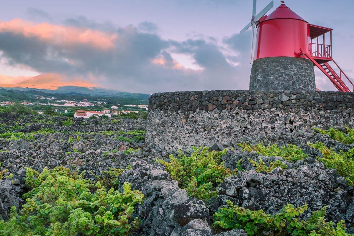 Viñedos de la isla de Pico