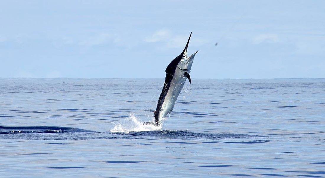 Pesca deportiva en las Azores. Excursiones desde São Miguel