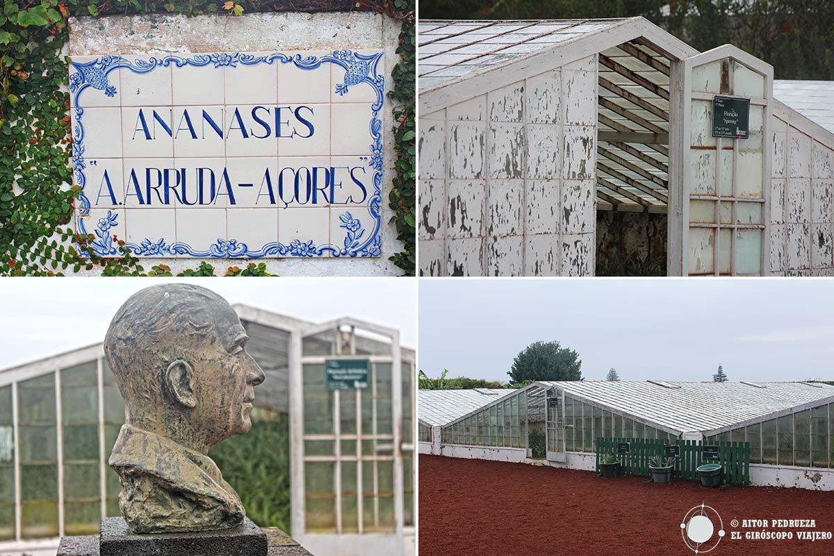 Fotografías de la plantación de Piñas Arruda en São Miguel