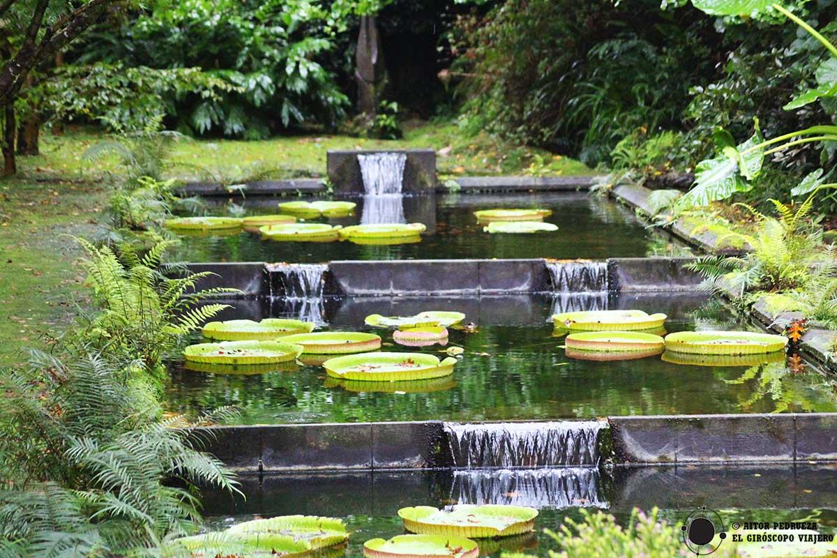 Estanques con nenúfares en el Jardín botánico Terra Nostra