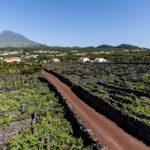 Paisaje de Viñas de la Isla de Pico, Patrimonio UNESCO